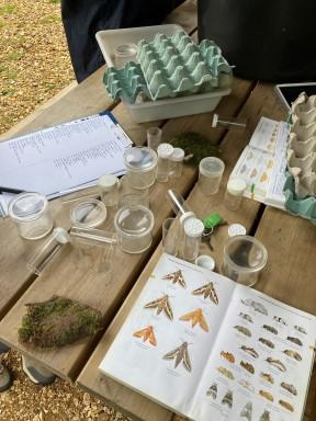Identifying moths